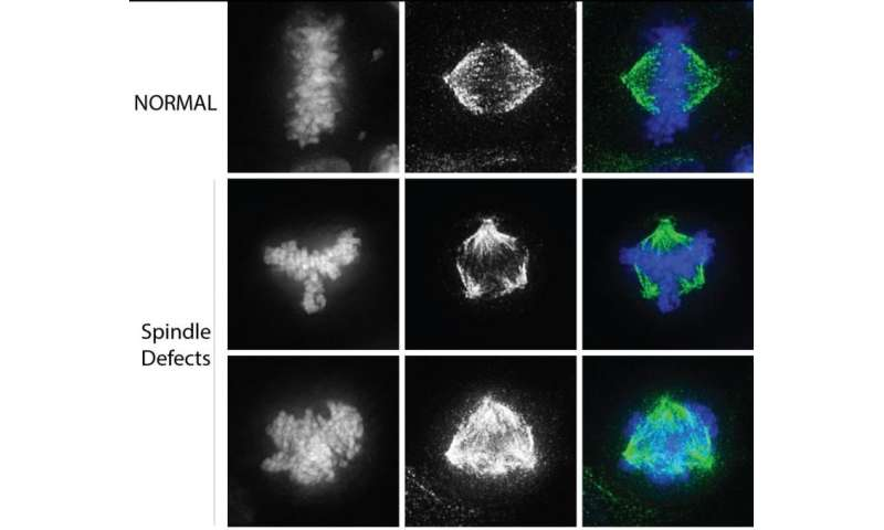 Uncovering a novel mechanism in cell division
