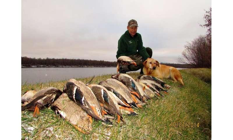 Under-studied boreal habitat key for North America's ducks