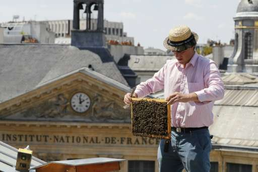 "Urban rooftops are one of the ways Paris is fighting against the ""worrying"" decline in the bee population, a trend Fra"
