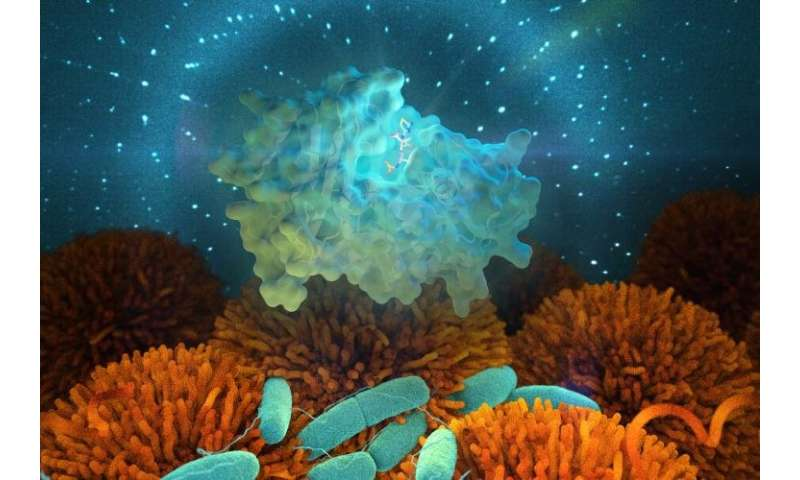 Using neutrons to study how resistant bacteria evolve