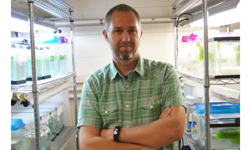 UTA biologist wins NSF CAREER grant to study effects of predators on evolution of Daphnia