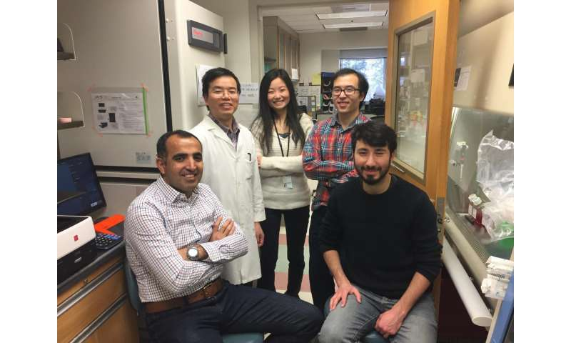 UVA finds way to view genes inside living cells
