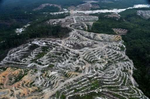 Vast swathes of rainforest are destroyed to make way for palm oil plantations, threatening endangered species and pushing indige