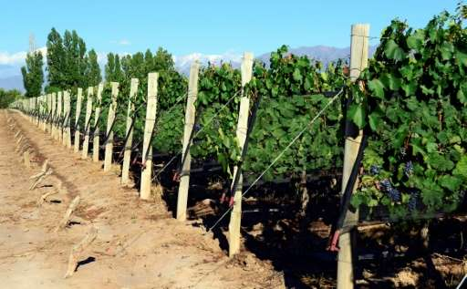 Vintners in Argentina's Mendoza region must contend with natural hazards, including frequent earthquakes