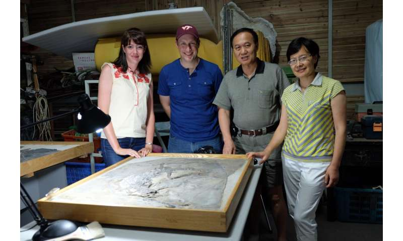 Virginia Tech researchers fill critical gap in fossil record of Chinese phytosaurs