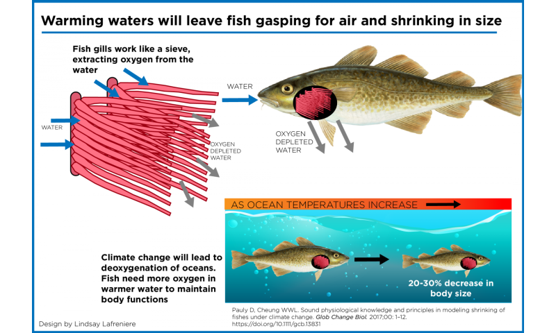 Warmer waters from climate change will leave fish shrinking, gasping for air