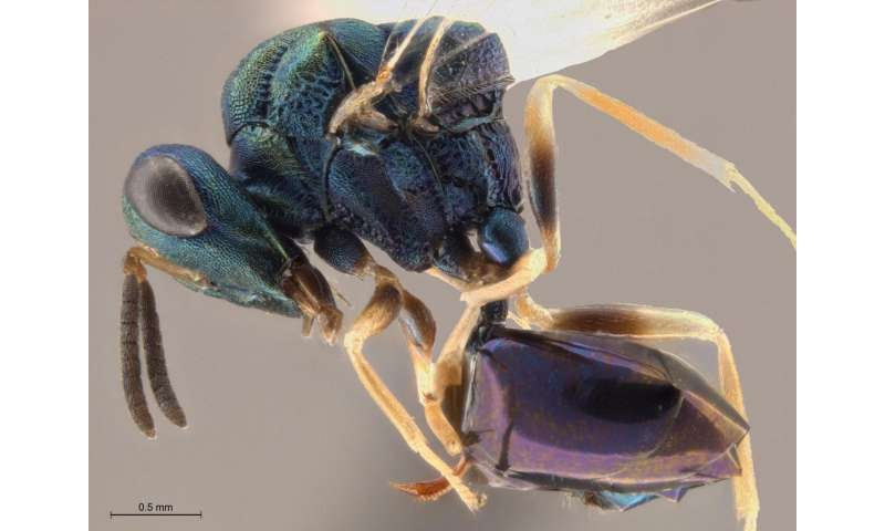 Wasps, ants, and Ani DiFranco