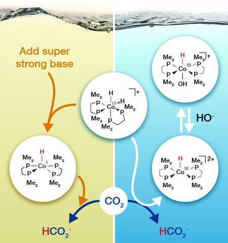 Water Changes How Cobalt Based Molecule Turns Carbon Dioxide Into