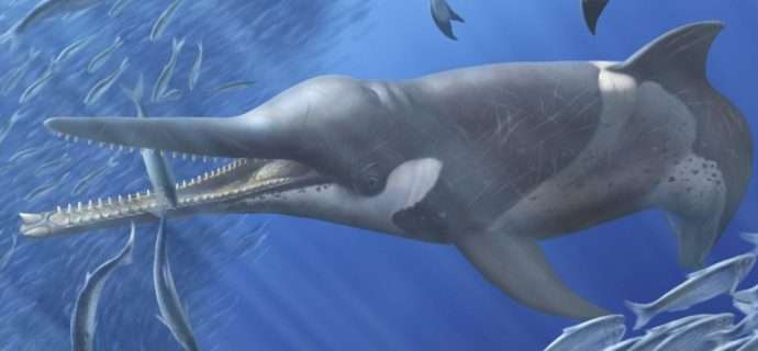 Whales, dolphins, and seals all follow the same evolutionary patterns