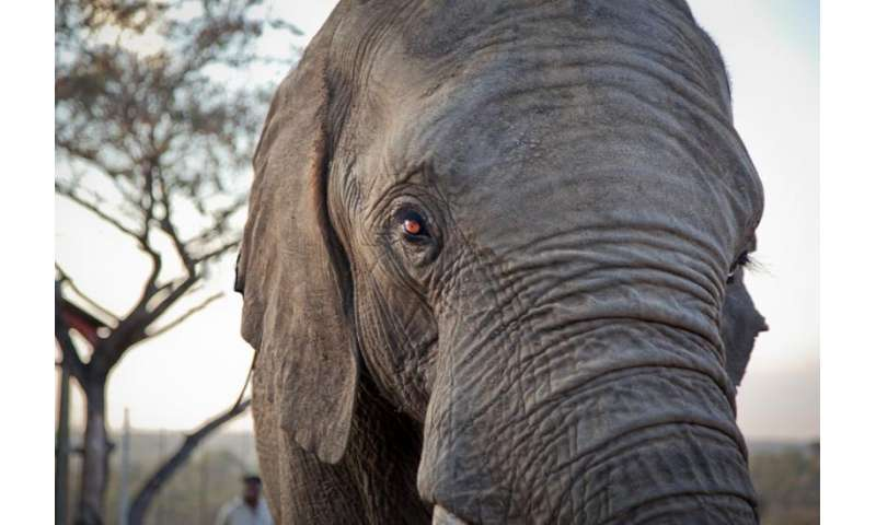 What elephants teach us about cancer prevention