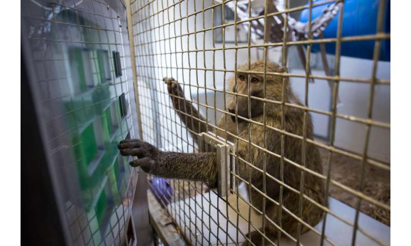 What humans and primates both know when it comes to numbers