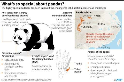 What's so special about pandas?