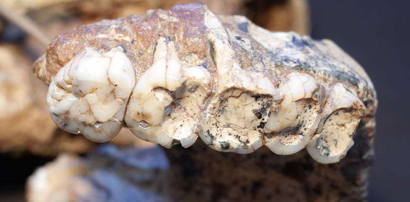 What teeth can reveal ...