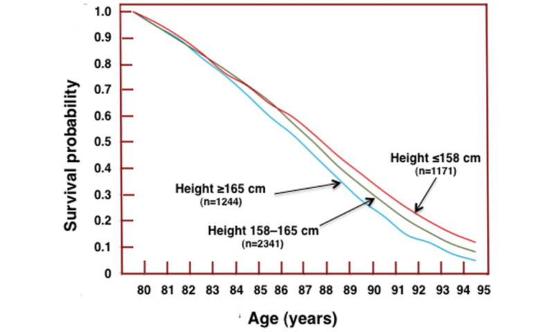 When bigger mammals live longer than smaller ones, why do taller humans die younger?