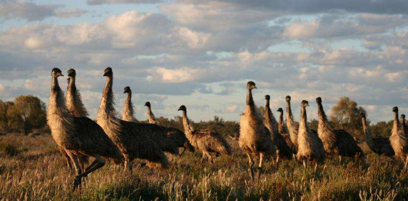 Which native animals should Australians eat?