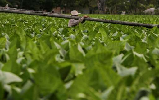 WHO warned that tobacco farming had become the main cause of deforestation in several countries
