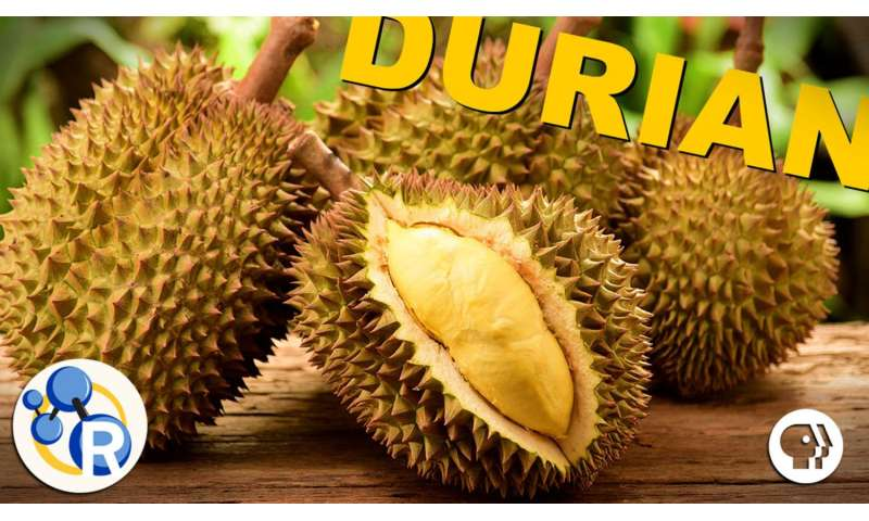 Why durian is the smelly 'king of fruits' (video)