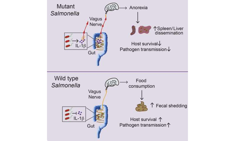 Why Salmonella wants its host to have a healthy appetite