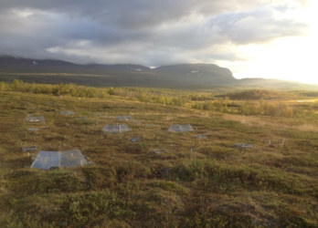 With climate change shrubs and trees expand northwards in the Subarctic