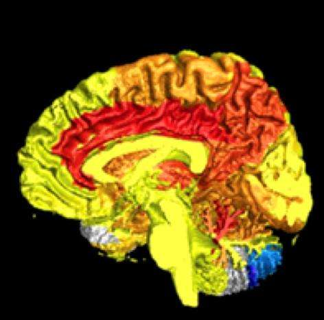 Women have more active brains than men