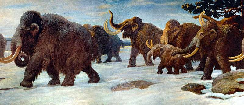 Woolly mammoths experienced a genomic meltdown just before extinction