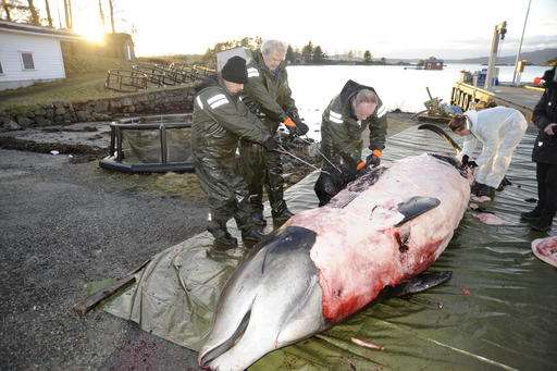 Zoologists say dead whale in Norway full of plastic bags