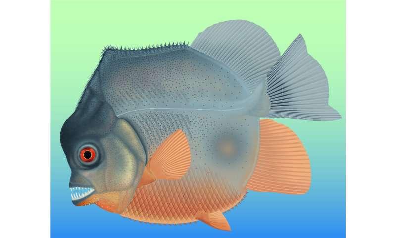 150-million-year old, piranha-like specimen is earliest known flesh-eating fish