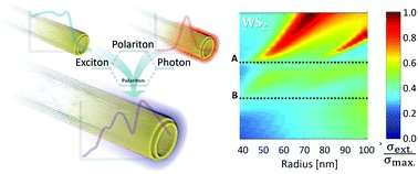 Optical secrets of disulfide nanotubes are disclosed