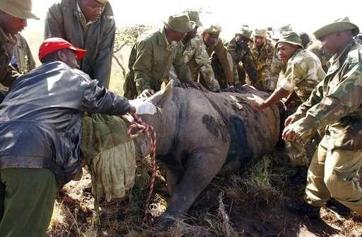 8 endangered black rhinos die in Kenya after relocation