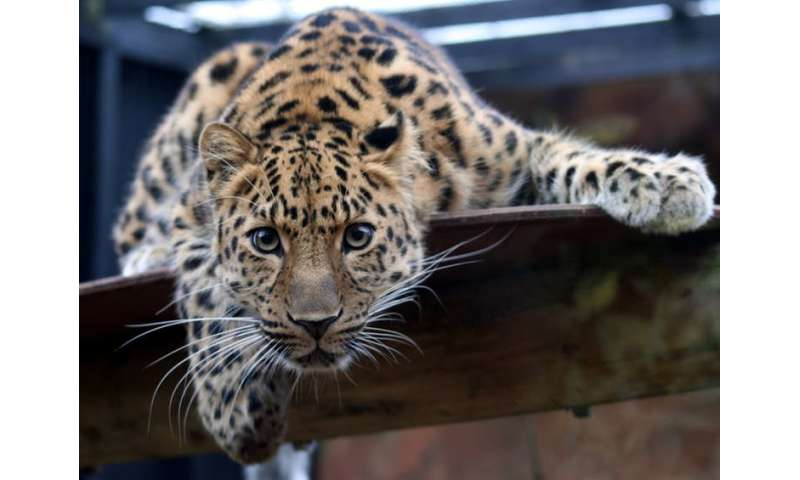 A ban on captive animals could speed up extinction