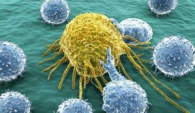 A combination of cancer immunotherapies could save more lives