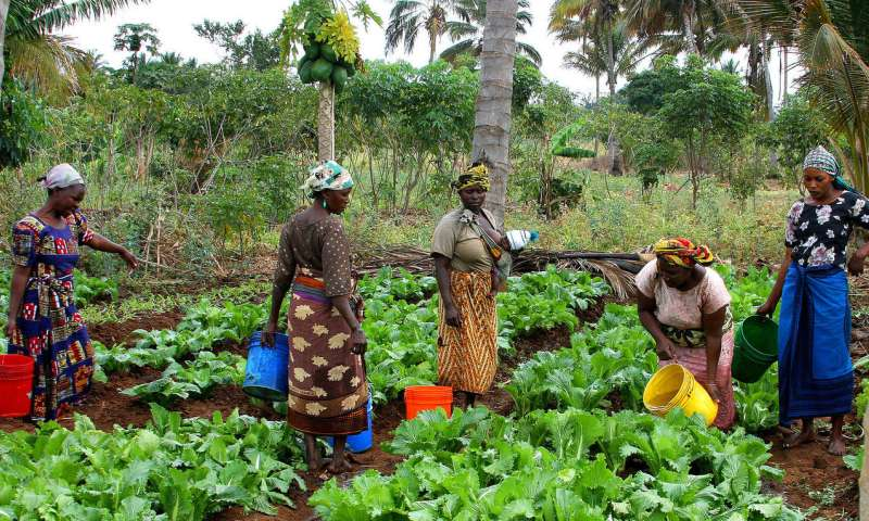 Los sistemas agroforestales pueden jugar un papel vital en la mitigación del cambio climático