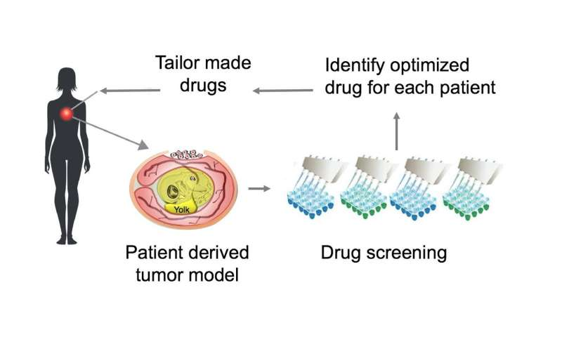 A major step towards individualized cancer therapy