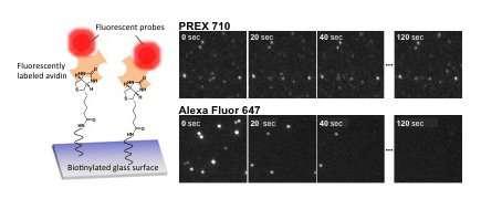A near-infrared fluorescent dye for long term bioimaging