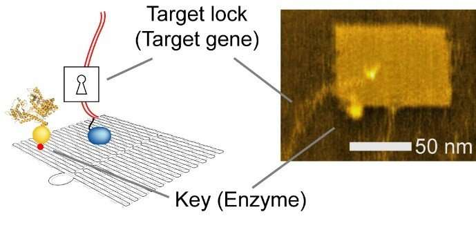 Autonomous gene expression control nanodevice will contribute to medical care