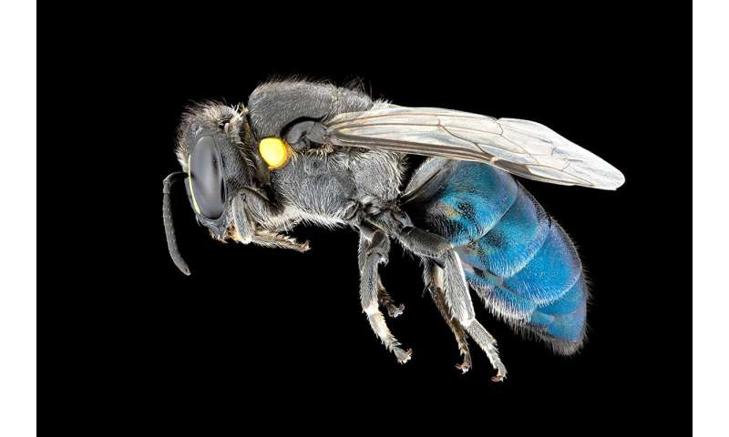 Beautiful photos put focus on native insects