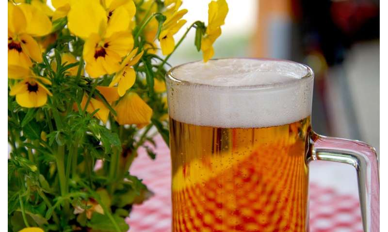 현재 맥주 생산에 사용되는 균주의 기원은?