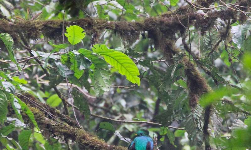 Birds retreating from climate change, deforestation in Honduras cloud forests