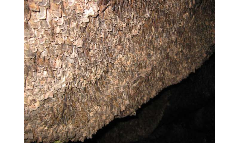Bogong moths first insect known to use magnetic sense in long-distance nocturnal migration