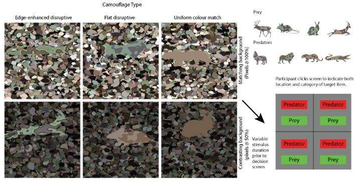 Camouflage protects animals – even if they are spotted
