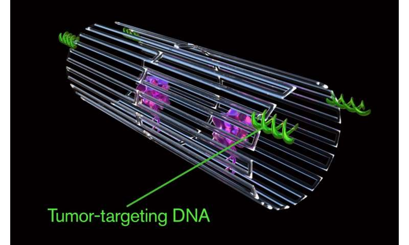 Cancer-fighting nanorobots programmed to seek and destroy tumors