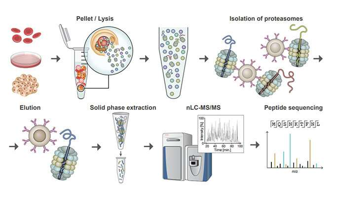 Cellular trash cans reveal the roles of proteins in disease