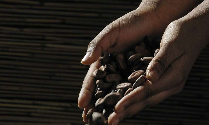 How much would you pay to eliminate child labor from your cocoa?