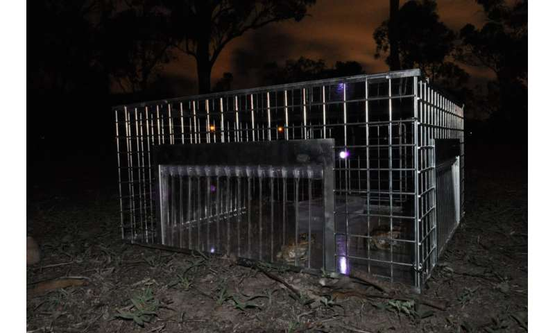 Come hither... how imitating mating males could cut cane toad numbers