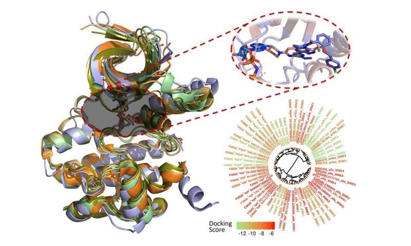 Computer modeling of WNK kinase inhibitors could offer new tools for understanding hypertension