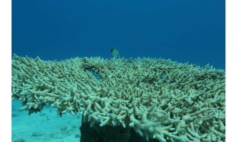 Coral reefs are home to a vast range of marine life