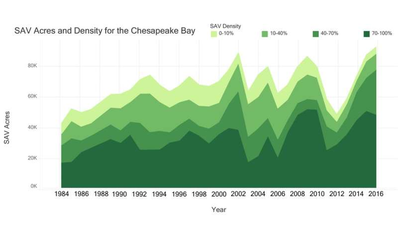 Cutting pollution in the Chesapeake Bay has helped underwater grasses rebound