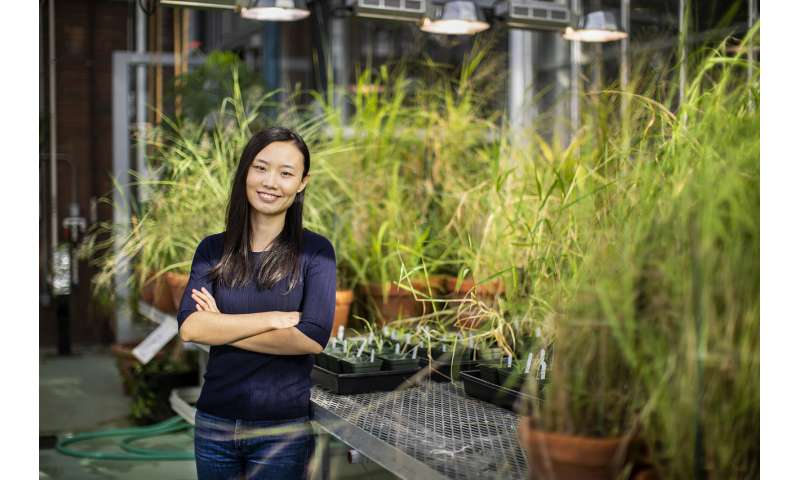 Dry conditions may help a new type of plant to gain a foothold on the planet