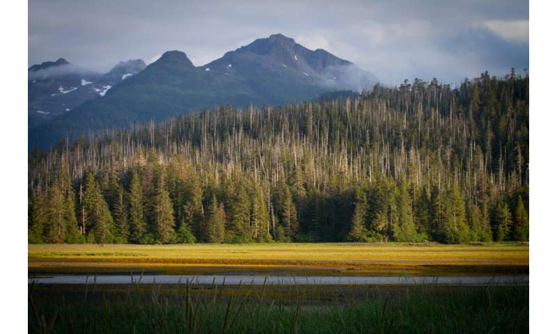 Ecologist finds optimism in Alaskan forests
