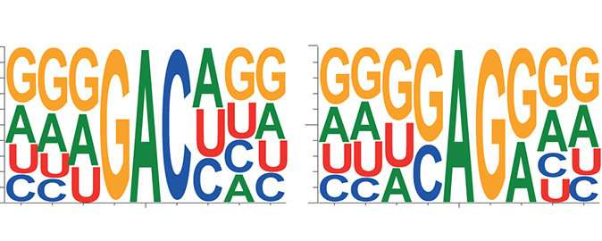 Encrypted messages in biological processes